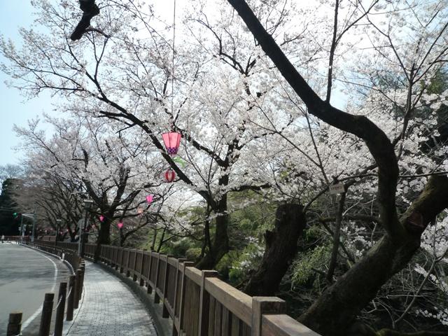 inuyama2-3.jpg