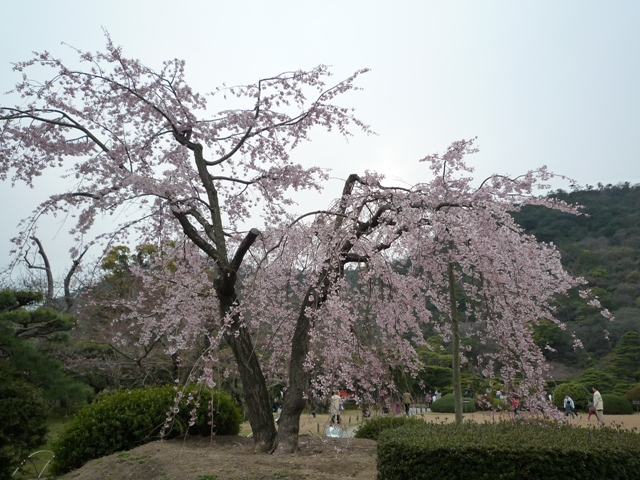 kagawa2-4.jpg