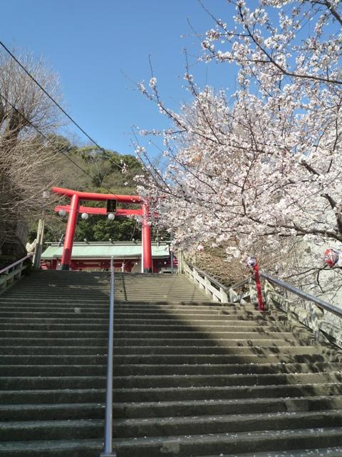 tokushima2-6.jpg