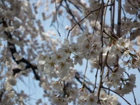 inuyama1-6.jpg