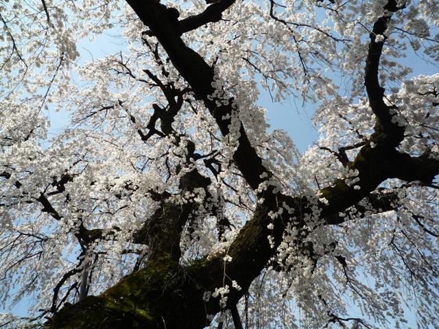 inuyama1-8.jpg