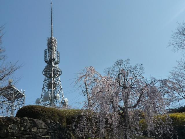 tokushima3-5.jpg