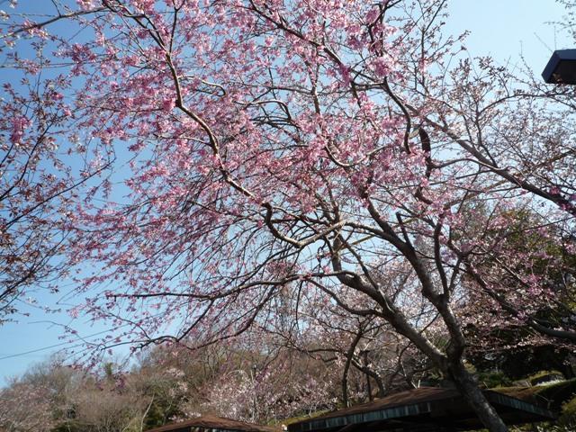 tokushima3-6.jpg